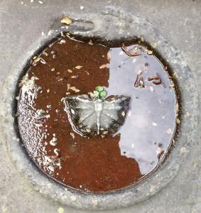 De bijgaande afbeelding is een symbolische voorstelling op een grafsteen voor de kerk van Winsum, kort na een regenbui. De vlinder symboliseert uiteraard de kortstondigheid van het menselijke bestaan, de slang die zich in zijn staart bijt, de zgn. 'ouroboros', symboliseert de cyclische aard van de natuur, het eeuwige terugkeren en de eenheid van alles.